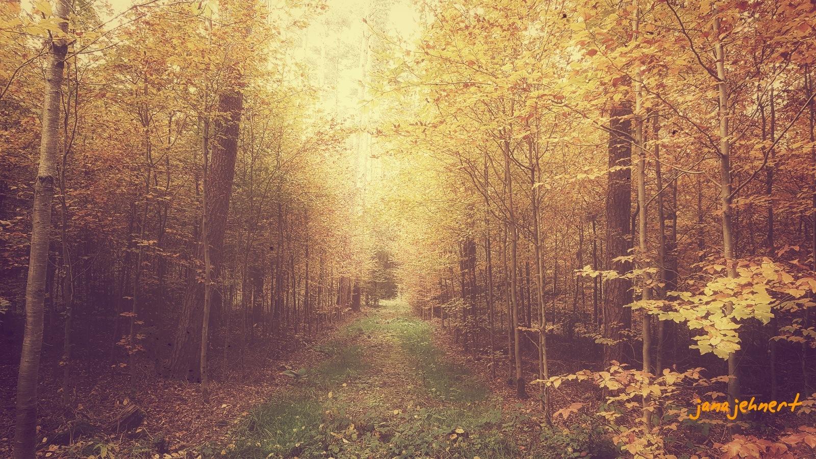 """' autumn walk l """"   by Jana"""