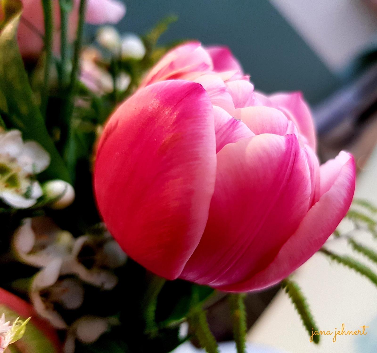 good morning greetings by Jana