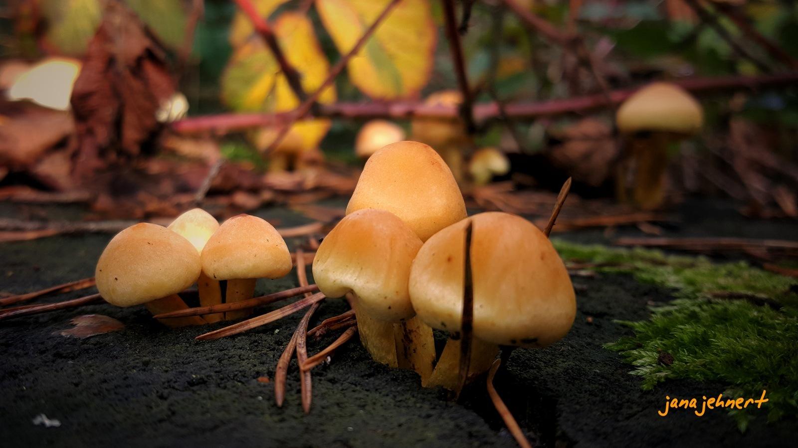 mushroom... by Jana