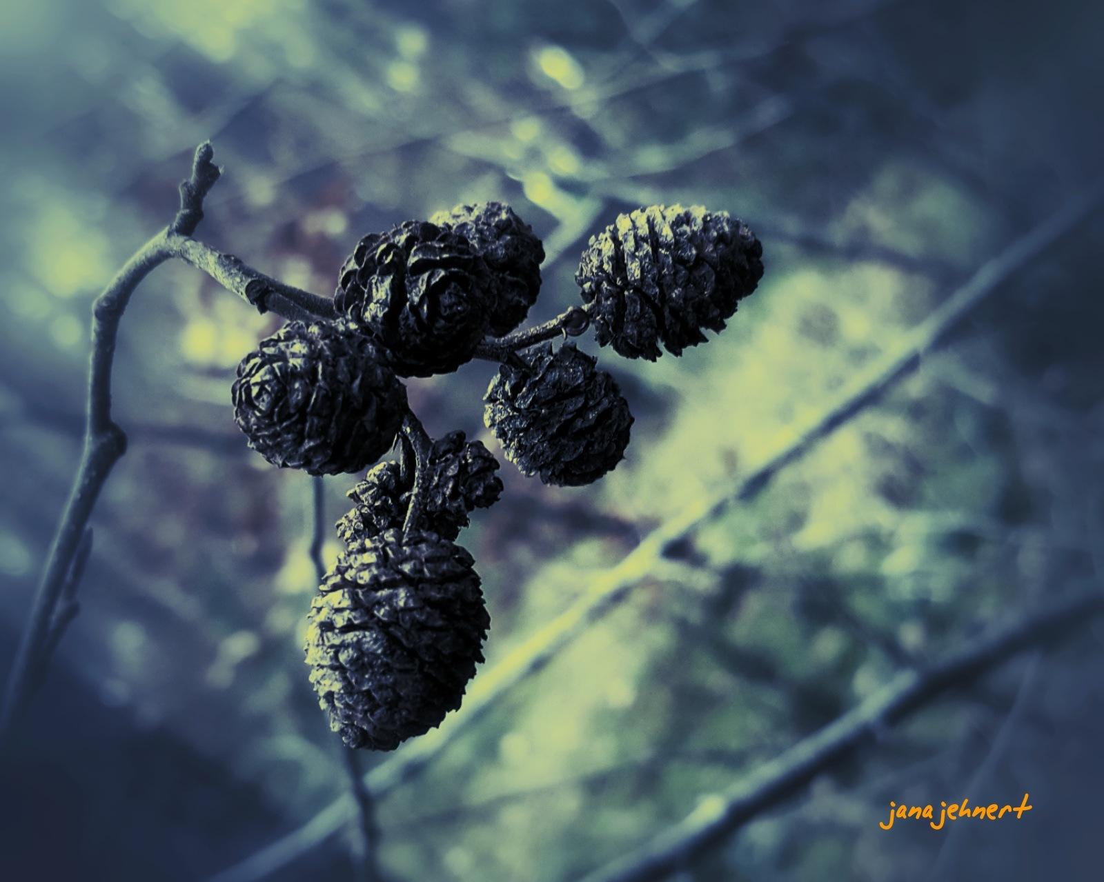 Wonderful autumn.... by Jana