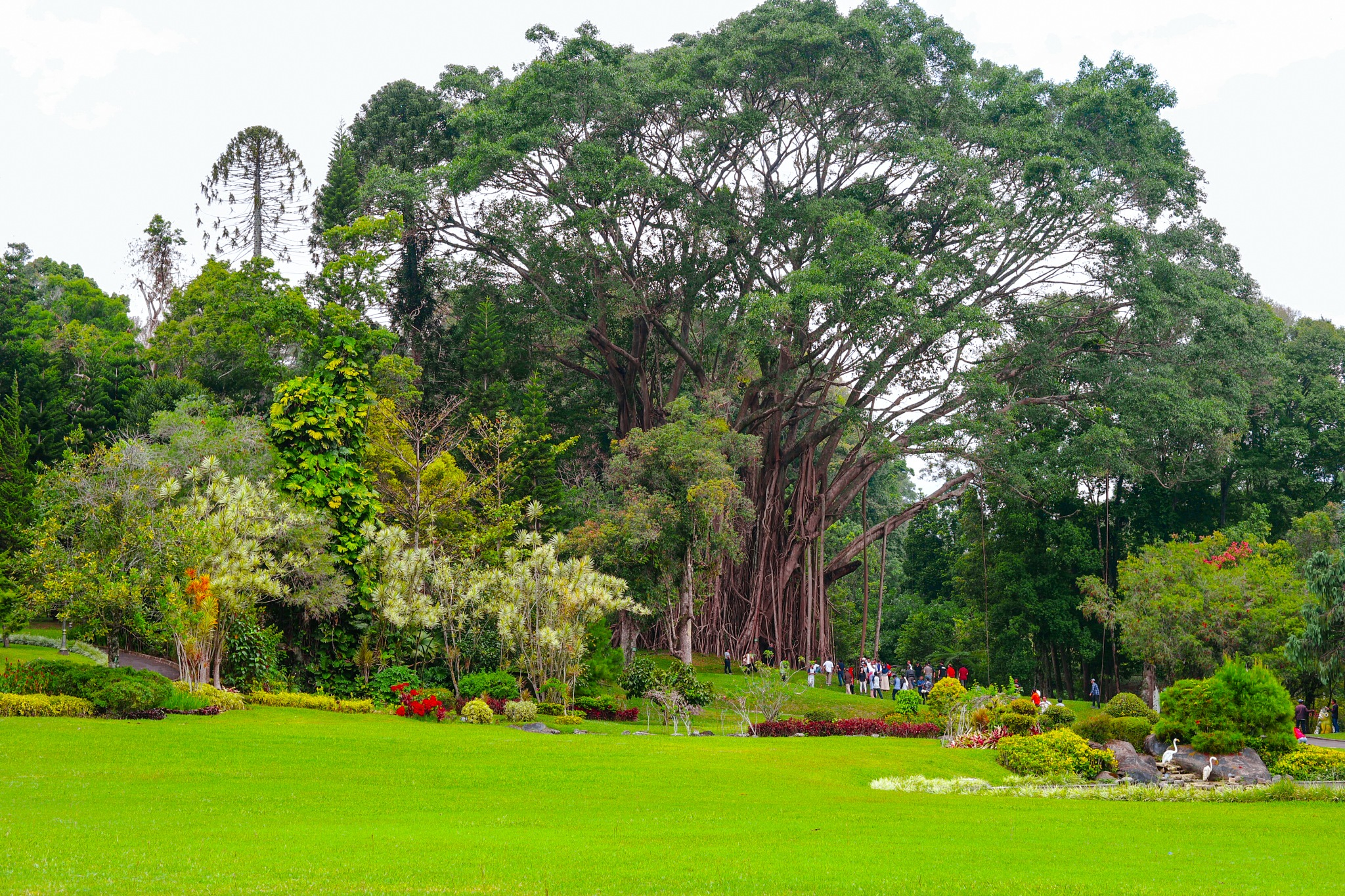 Garden at Cipanas Palace 2 by neilstha firman