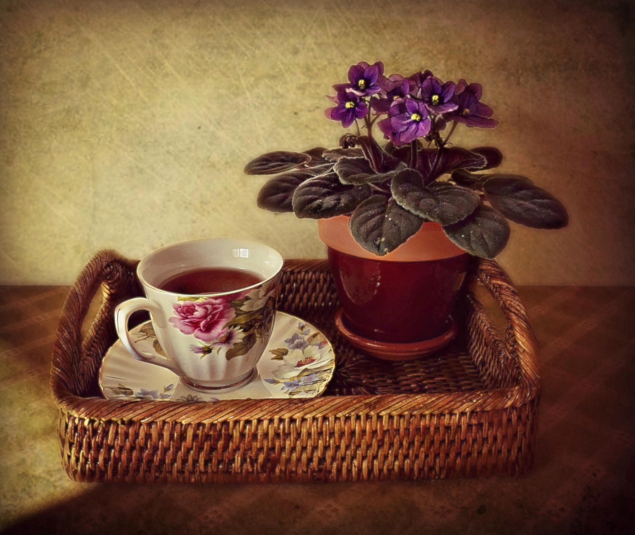 Photo in Random #still life #rattan tea tray #teacup #saucer #african violet #flower #saintpaulia #texture #sunlight