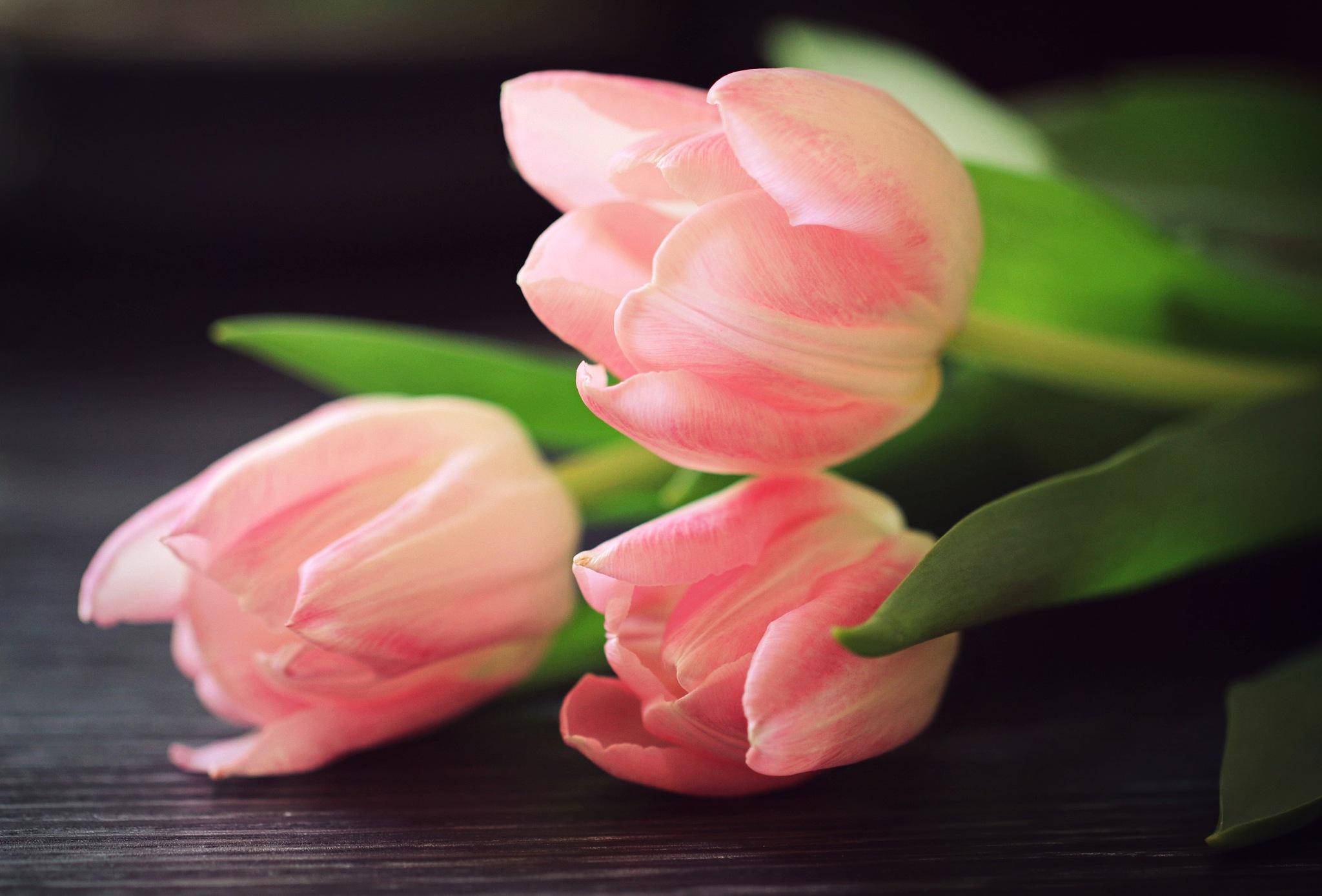 Blushing Pink by serenacltan