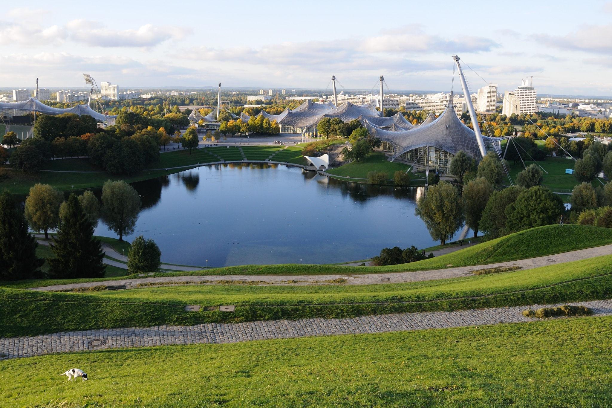 Small white dog in the Olympic park by Zdenek Krchak