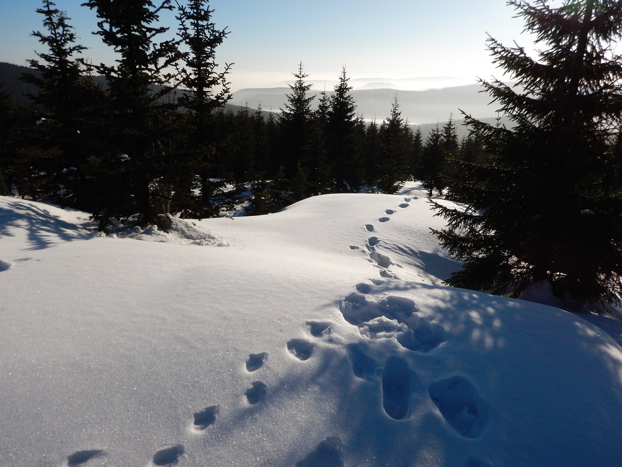 Tracks in snow by Zdenek Krchak