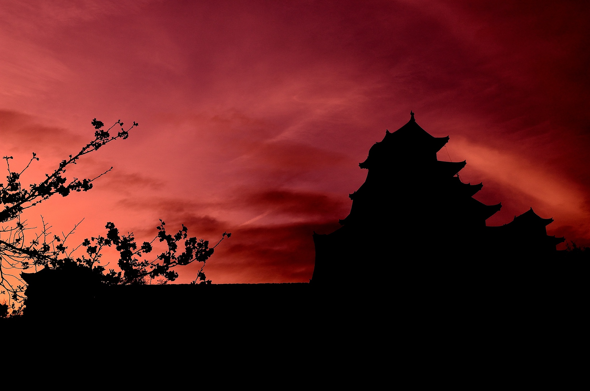 Himeji castle at twilight in supring with cherry tree by Hiroaki Hattori