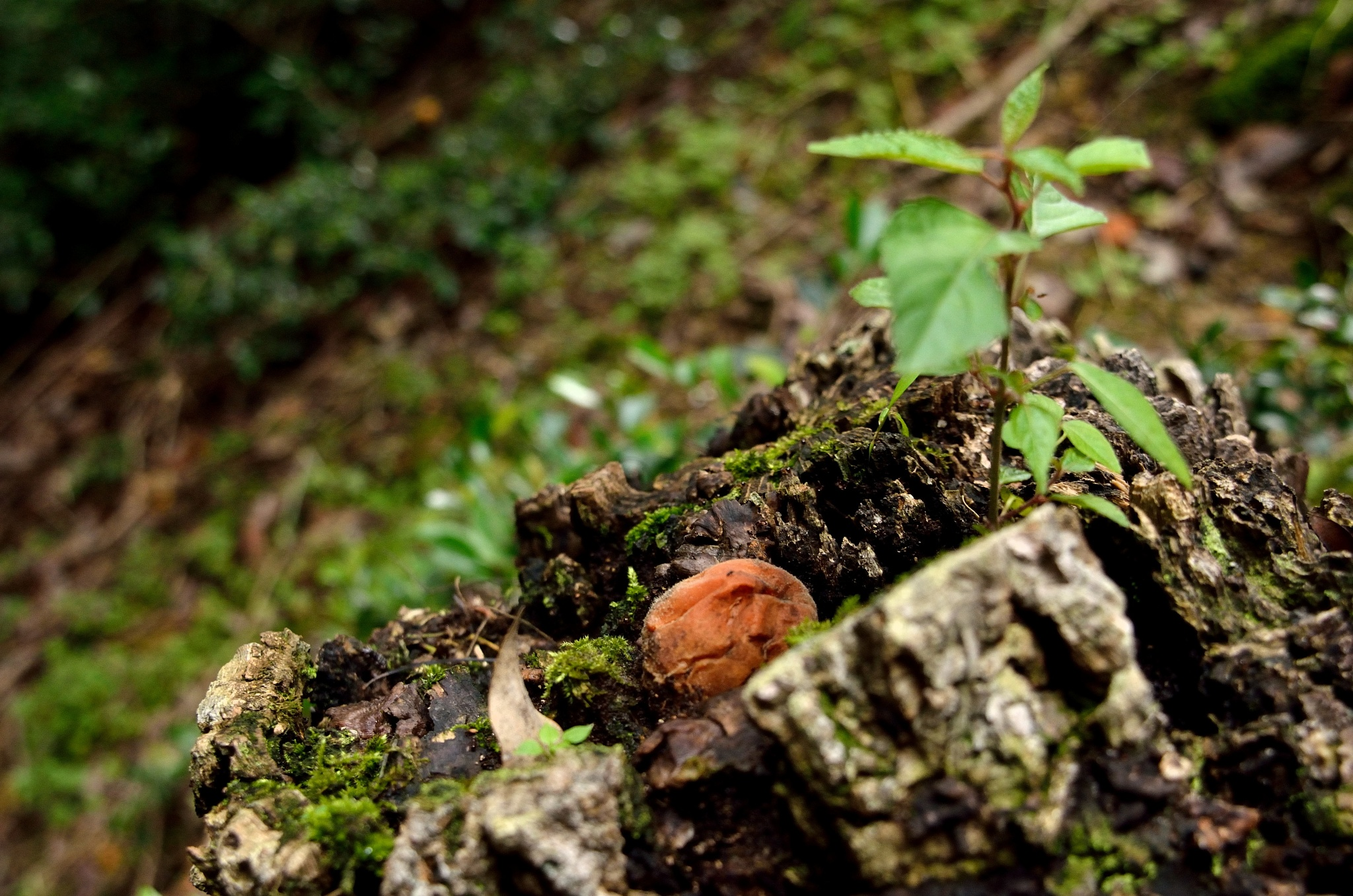 Stump and the plum of the real by Hiroaki Hattori