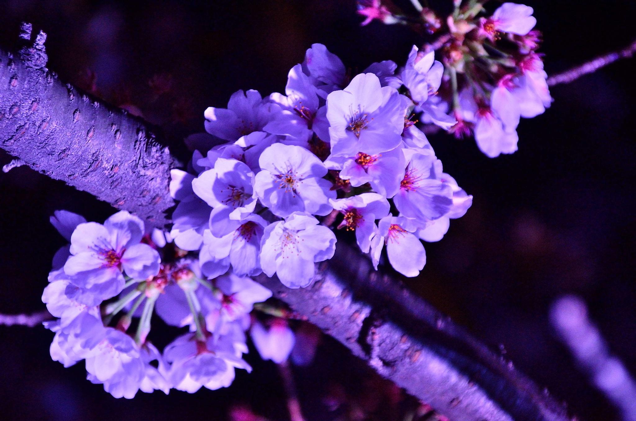 under blue light by Hiroaki Hattori