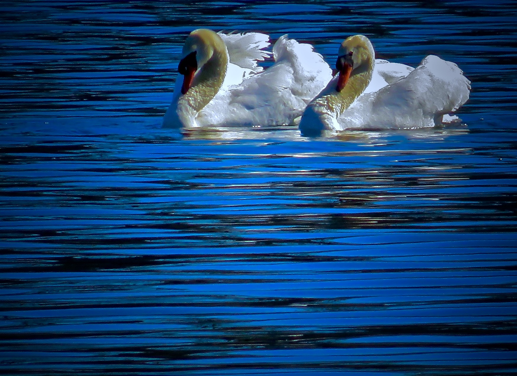white n blue always seems to be paired off in twos  by David Devion