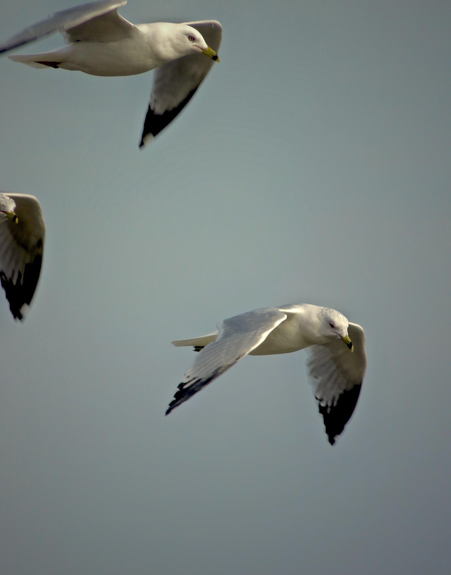 in flight  by David Devion