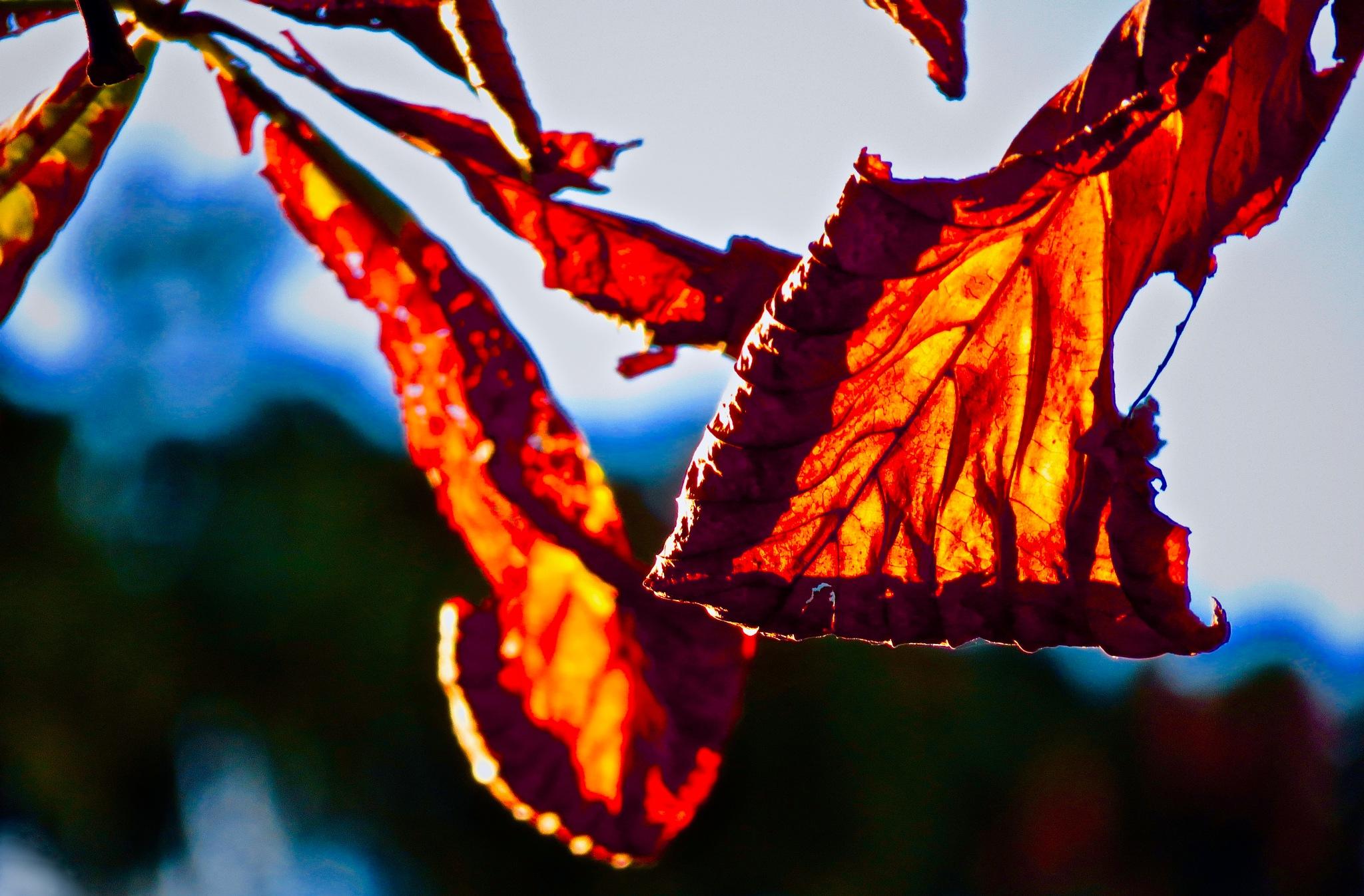 that so cool hue of flaming orange n red !! by David Devion