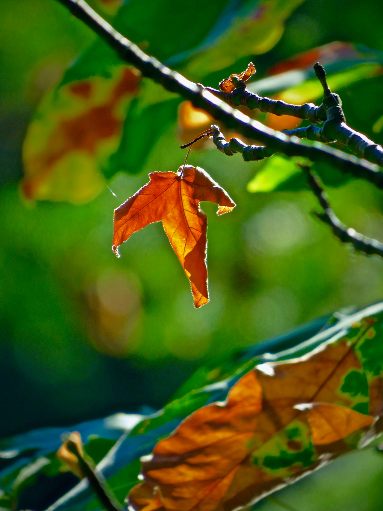 is some places the leaves begin to turn in august  by David Devion