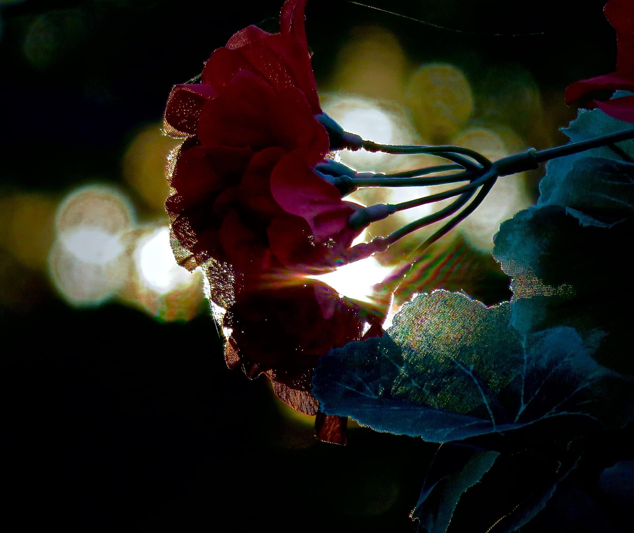 do funny flowers feel it when in the breeze ?? by David Devion