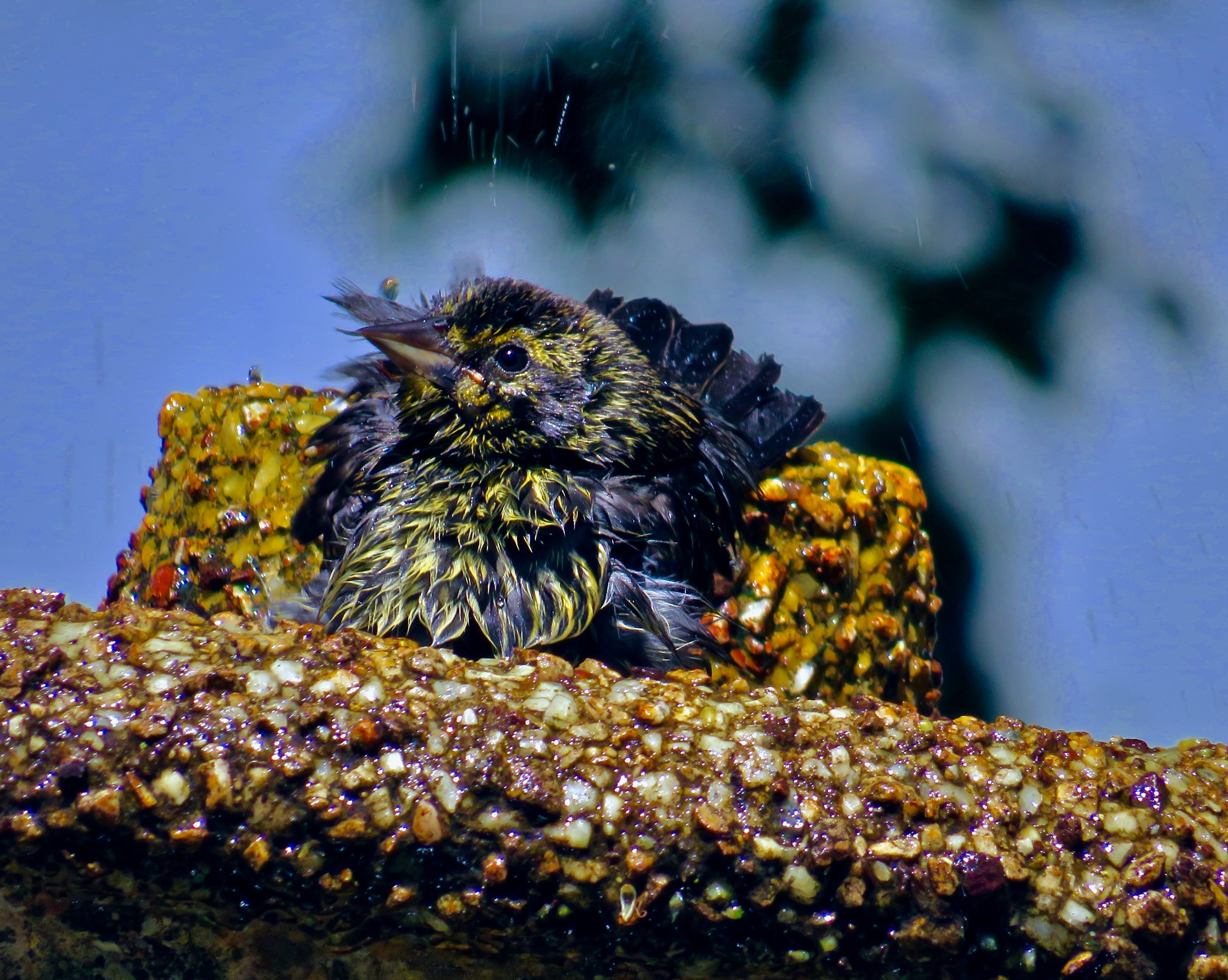 looking all happy n cool in the birdie pool !! by David Devion