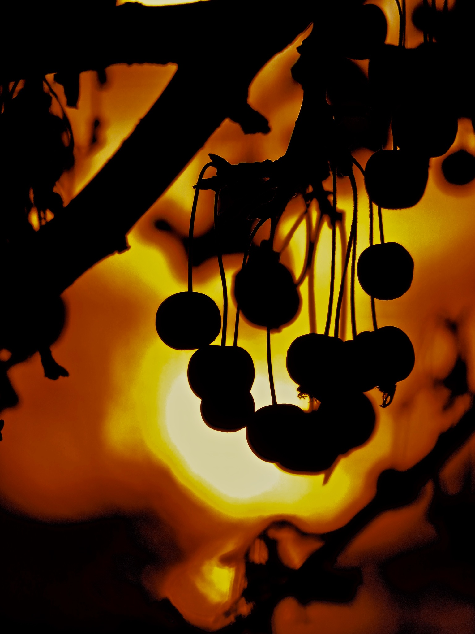 berries at twilight always makes for a photo delight !! by David Devion