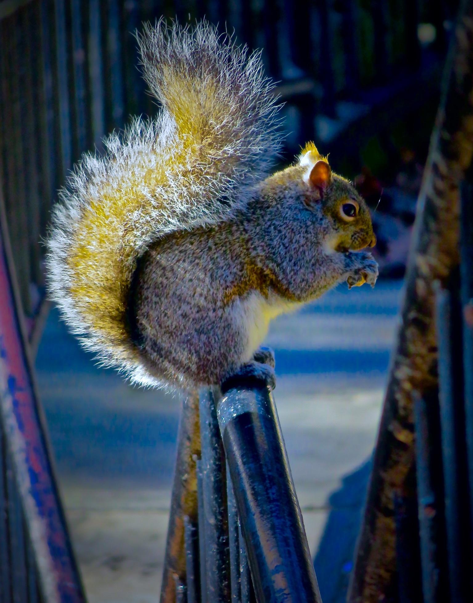 always fun feeding the squirrels !! ..... :) by David Devion