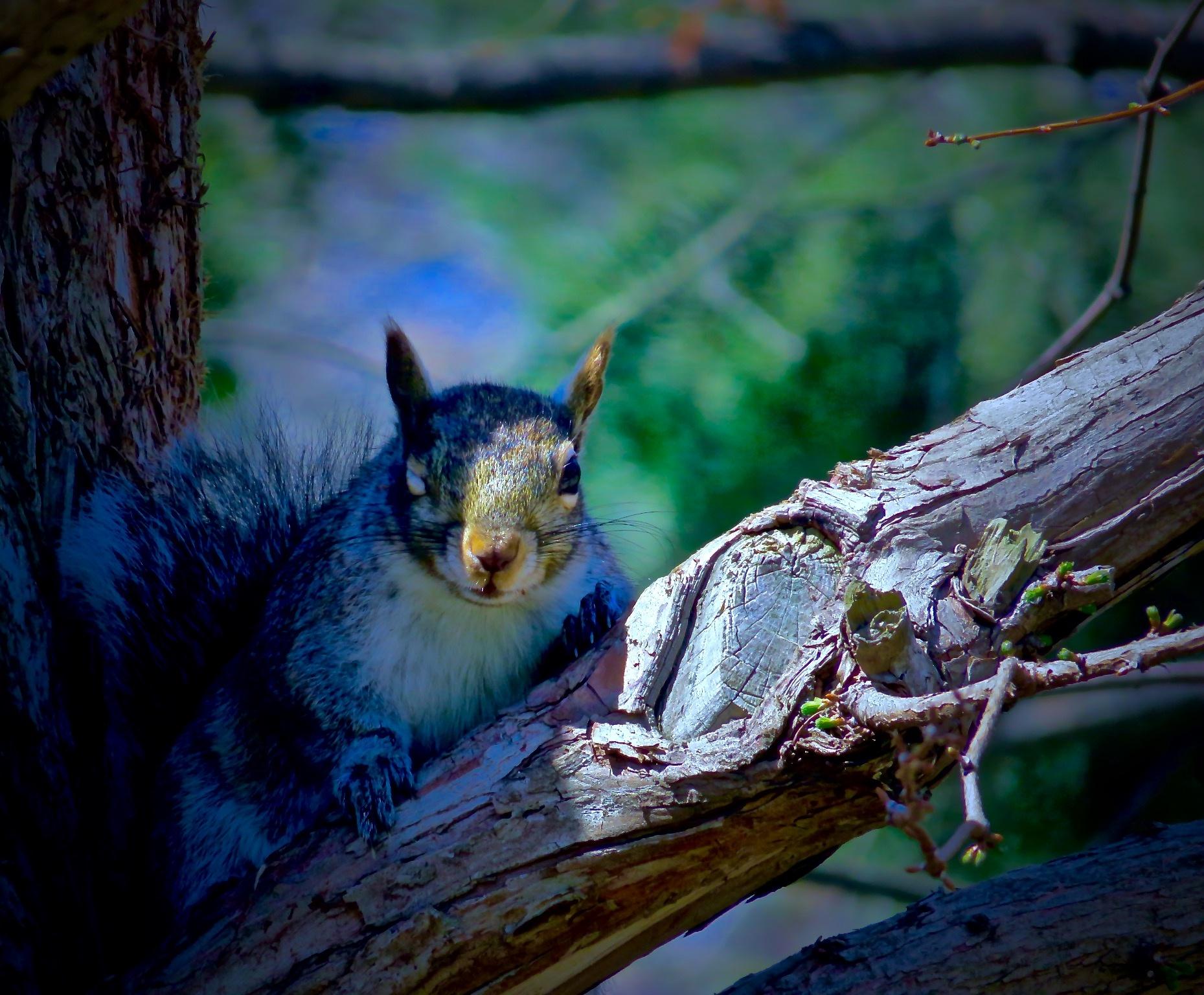 lol .... ya know ya got it, when ya get winked at by a squirrel !!! .... ;) by David Devion