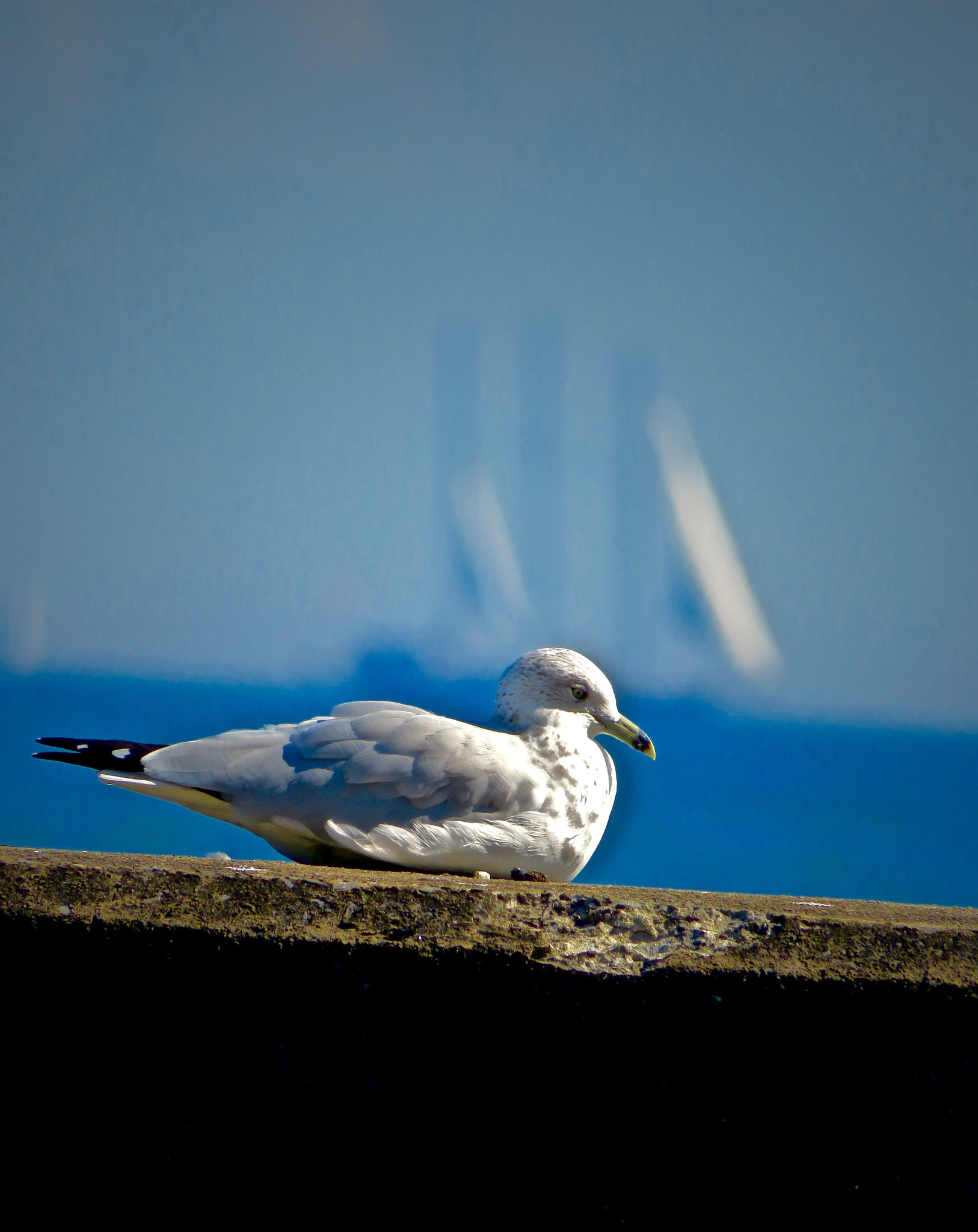 hanging out watching the boats go by ....... ;) by David Devion