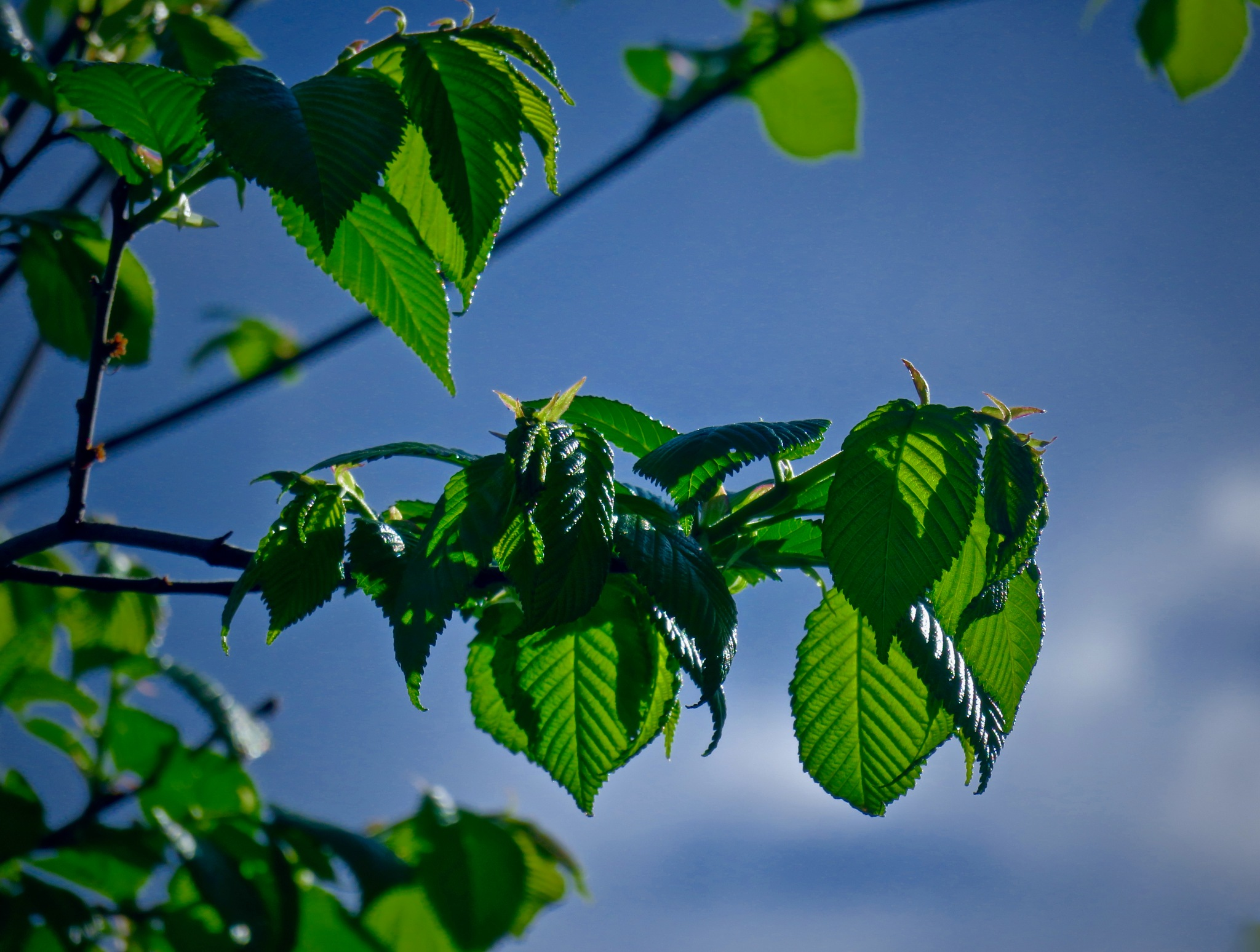 the leaves will turn into flowers within 500 hours by David Devion