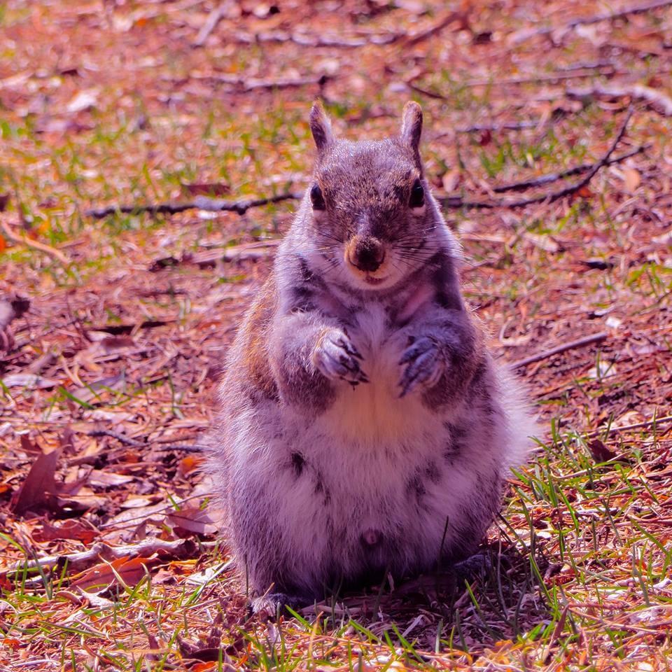 hey !!! .... left over easter bunnie yummies in a few days ... yay  !!! by David Devion