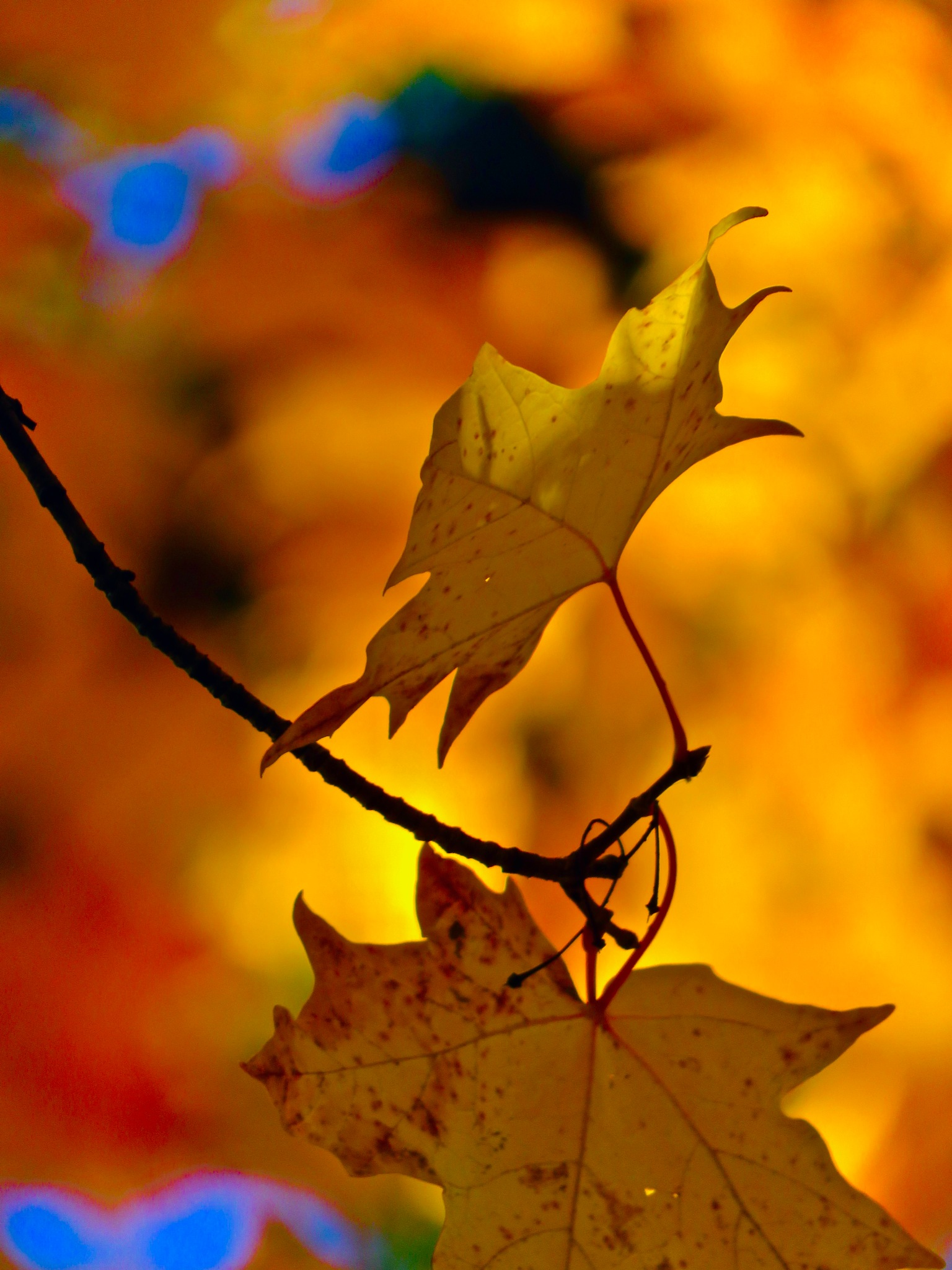 as the yellows, oranges n golds start to take hold  by David Devion