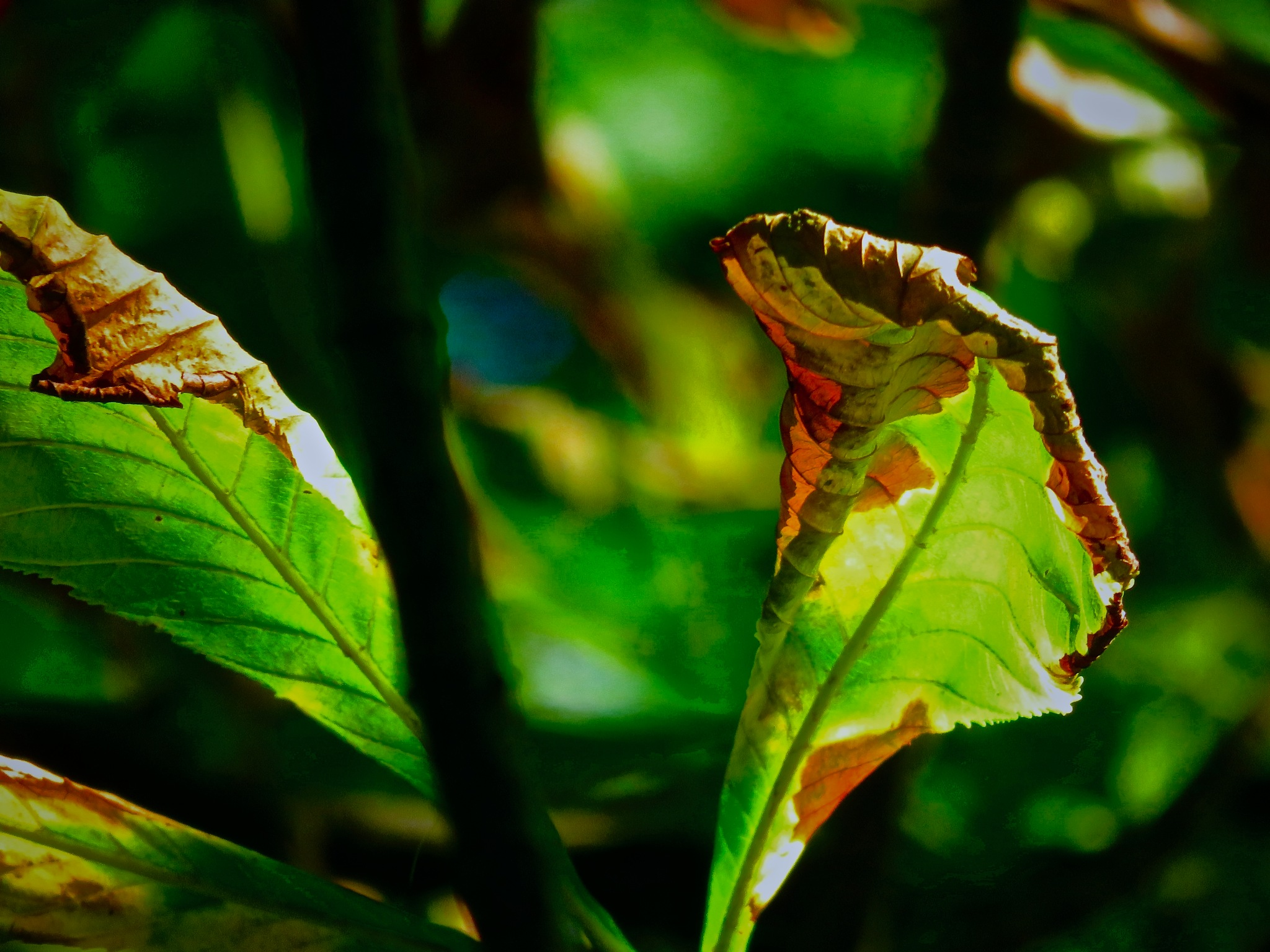 how I know the season hath begin to permanently  turn by David Devion