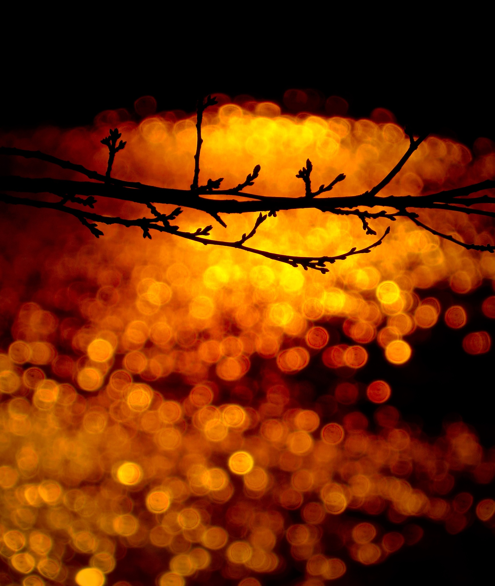 golden water highlighting the branches from the other night by David Devion