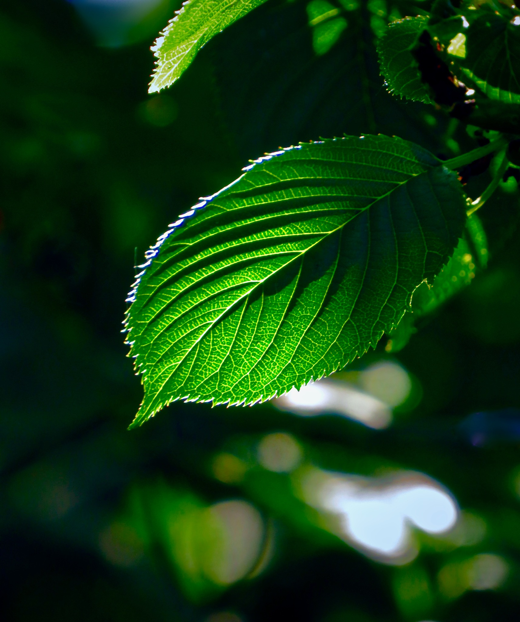 spring fresh n fulla green ... kinda like natures ice cream !! by David Devion