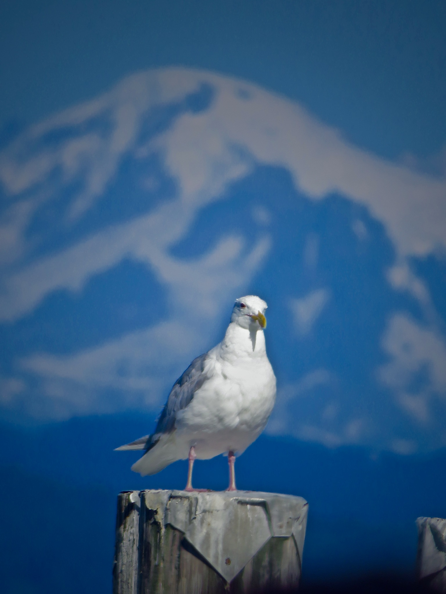 the mountains and the sea .... if yer a bird its a good place to be  by David Devion