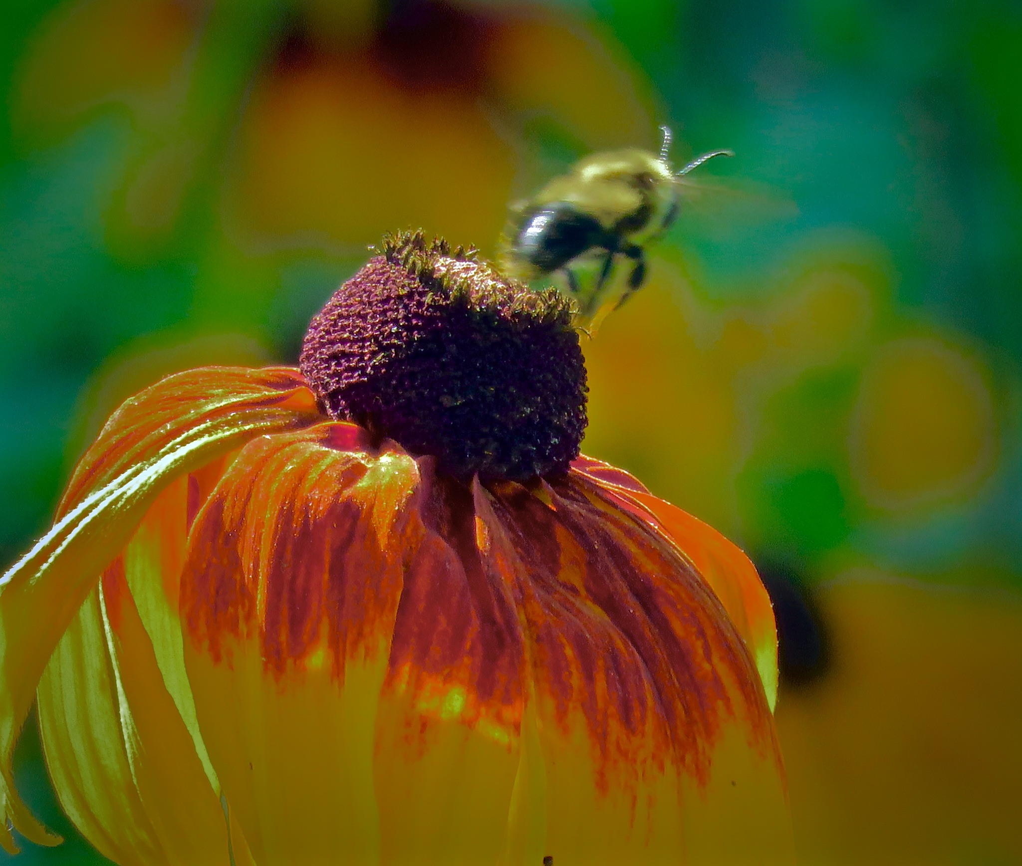 have only seen a few bees so far ... but coming soon  by David Devion