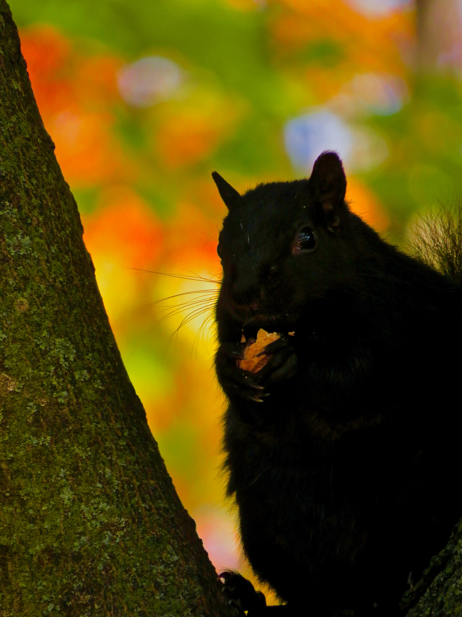 liked how the whiskers played against the background as he munched in the shade by David Devion