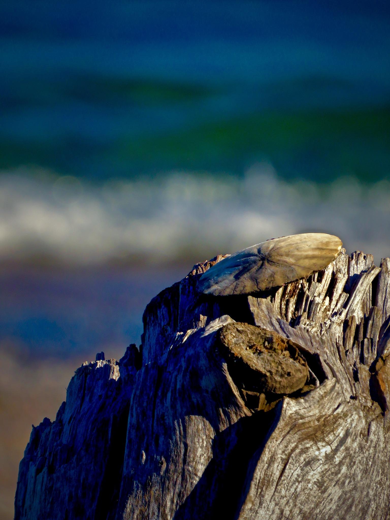 hangin round that non salty breeze by David Devion