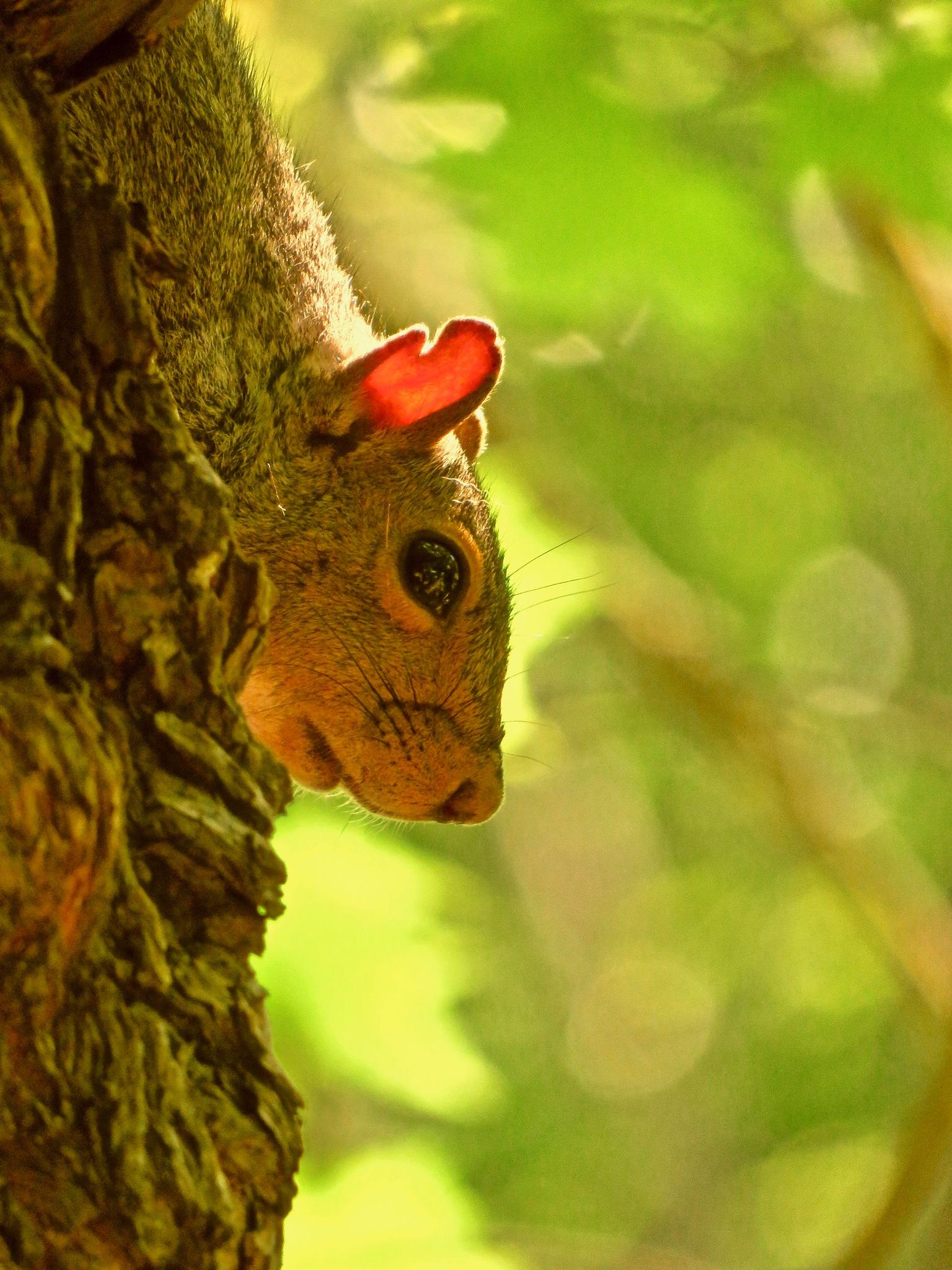 wot no nuts ?? .... oh futz by David Devion