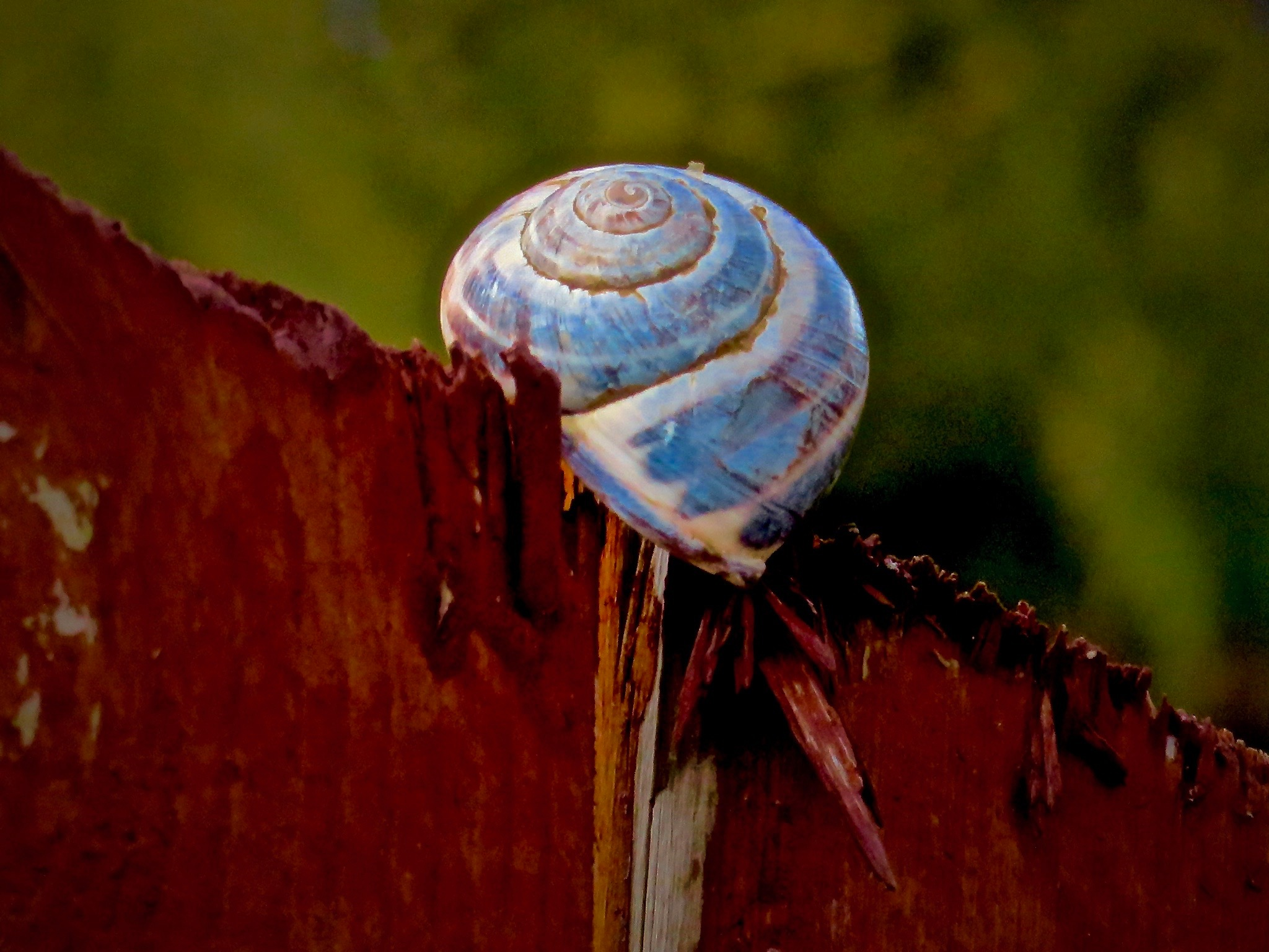 sometimes ya find things in the strangest places after a big huge windstorm !! by David Devion