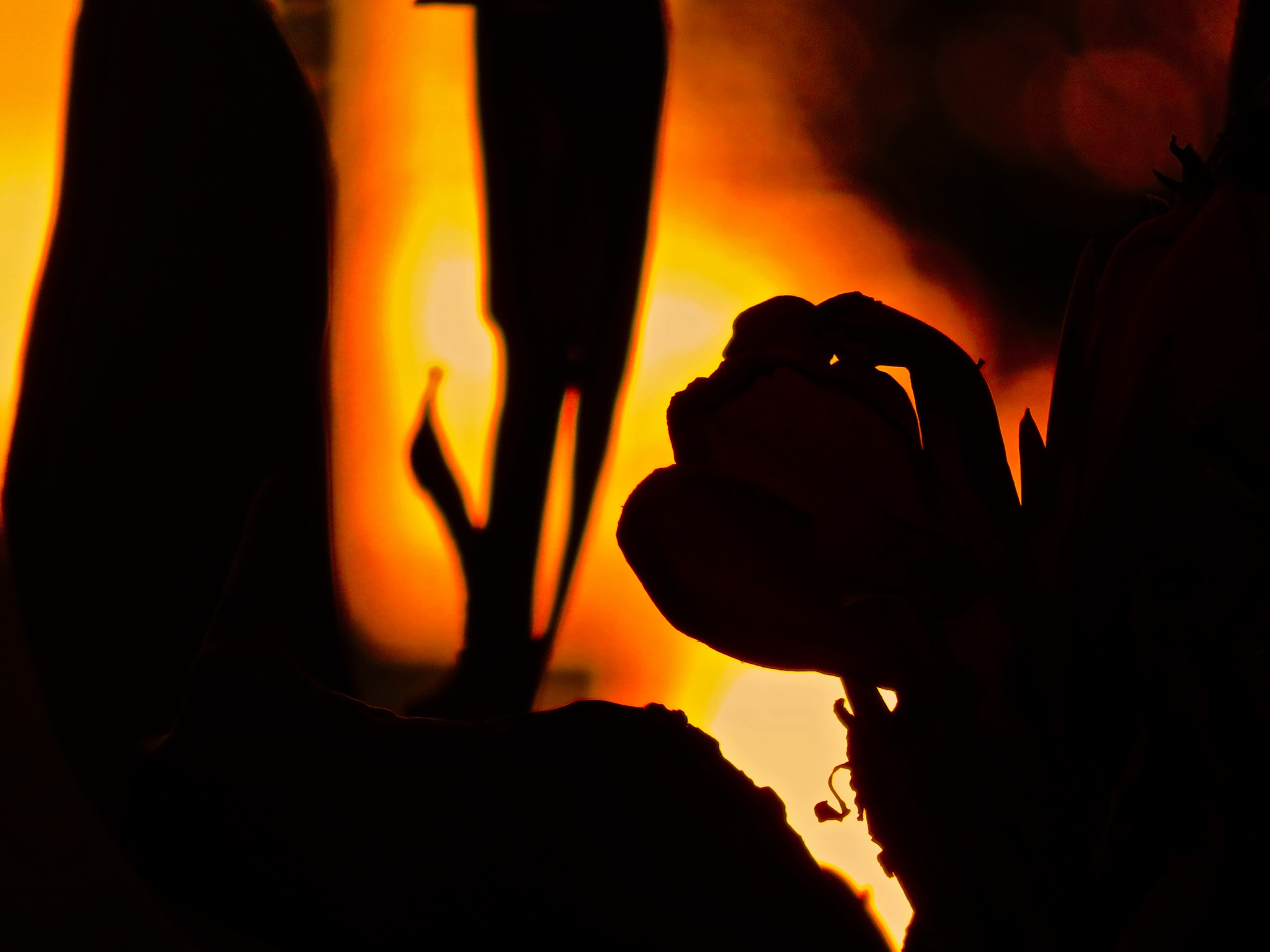 as the red rose turns out the light for the night .... by David Devion