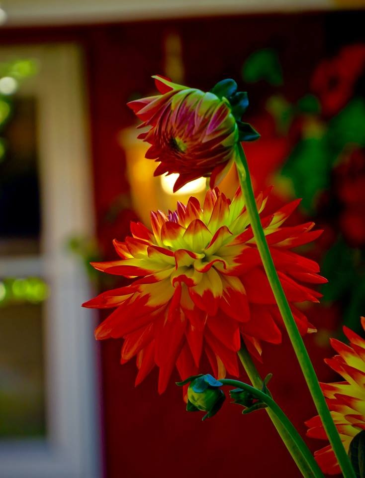 showing off the local flower power in a place they grow all year long by David Devion