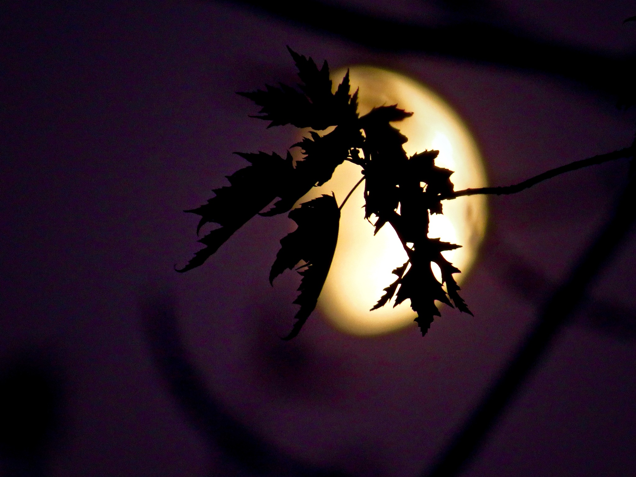 blowing softly in the moon lit breeze by David Devion