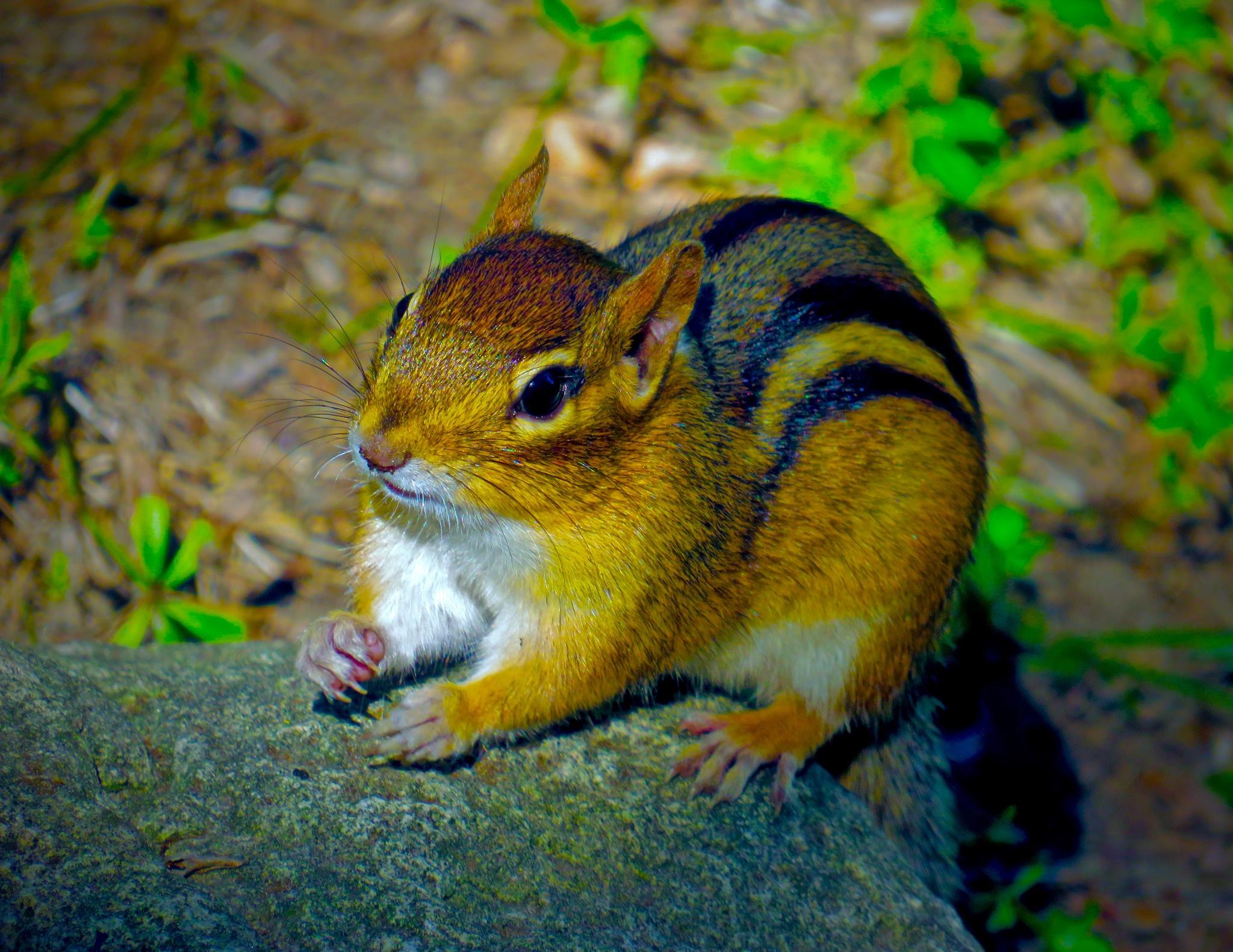 so hey .... ya got nuts or wot huh !!!  by David Devion