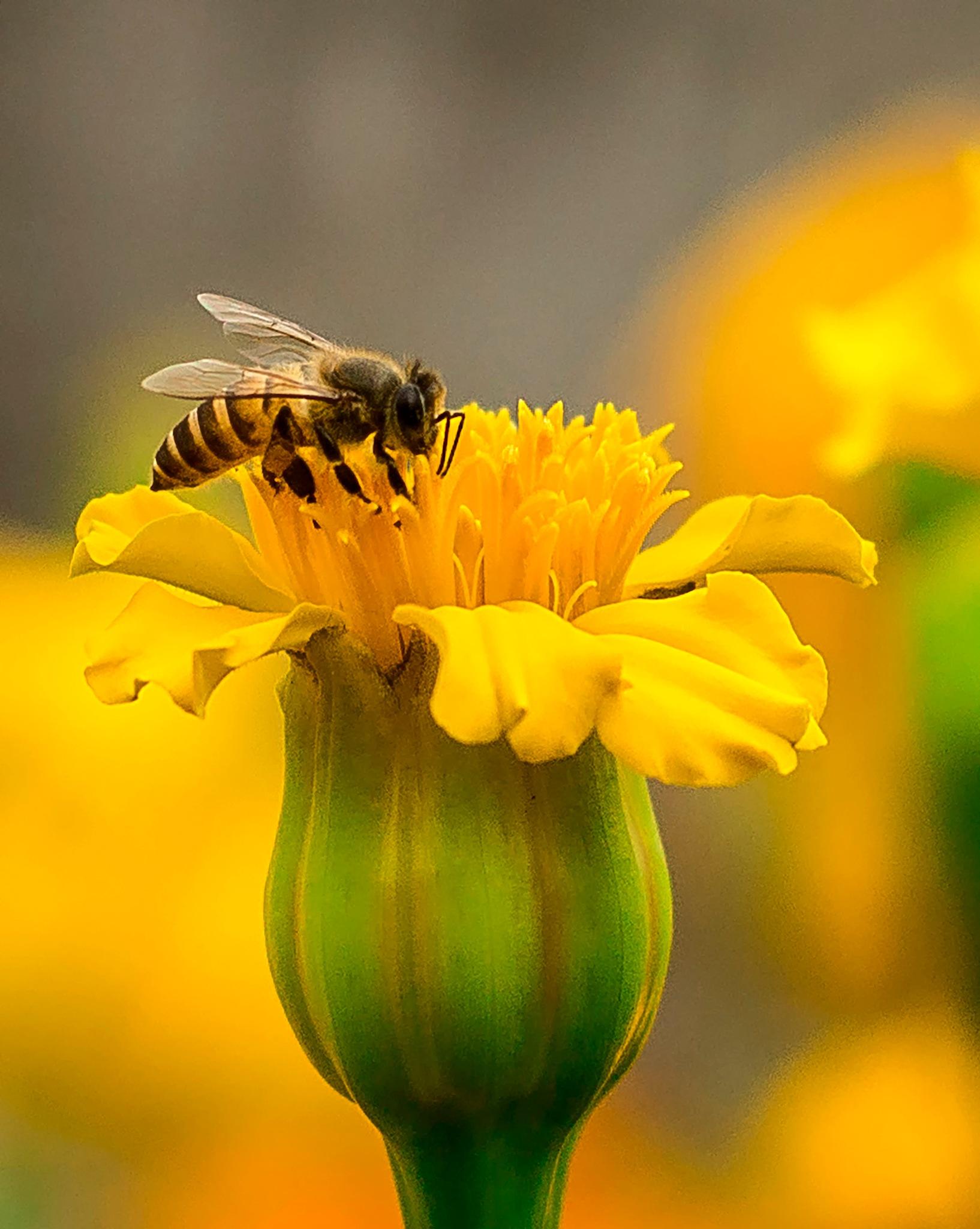 The bee by Ehsanul Siddiq Aranya