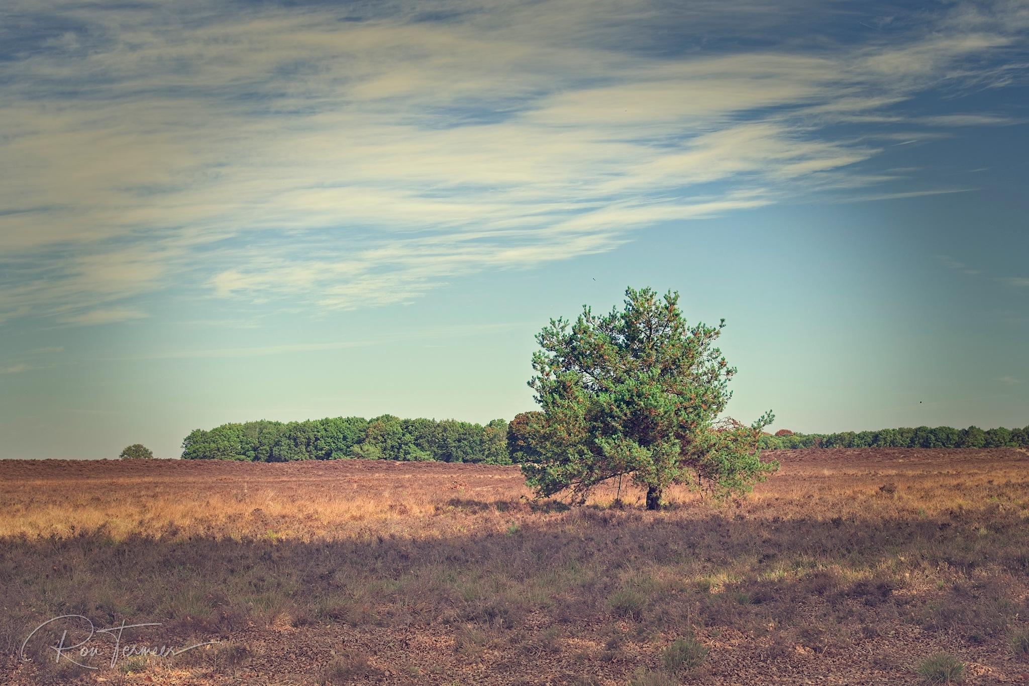 Nature walk by Ron Termeer