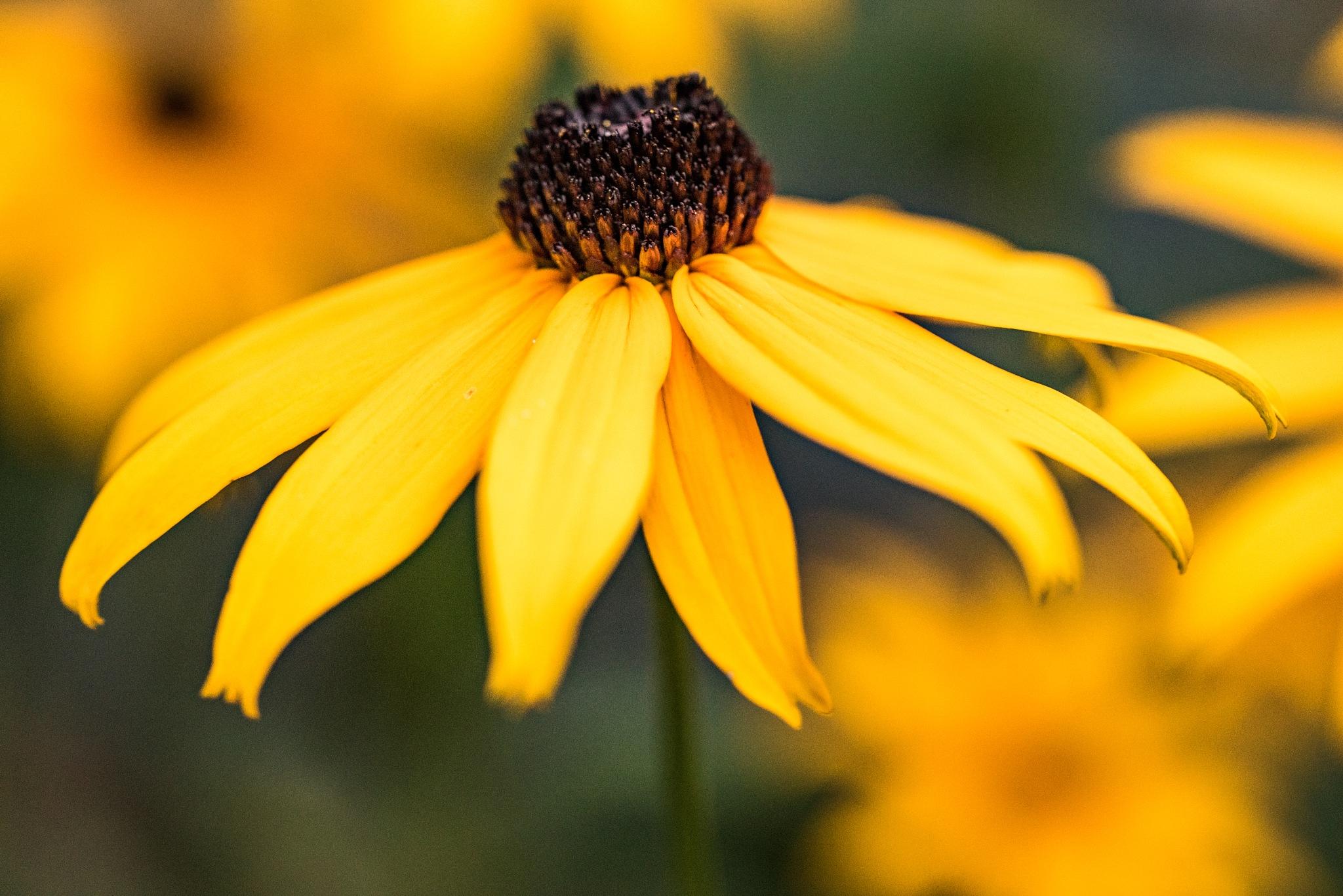 A Yellow Fellow by Gruca_joe