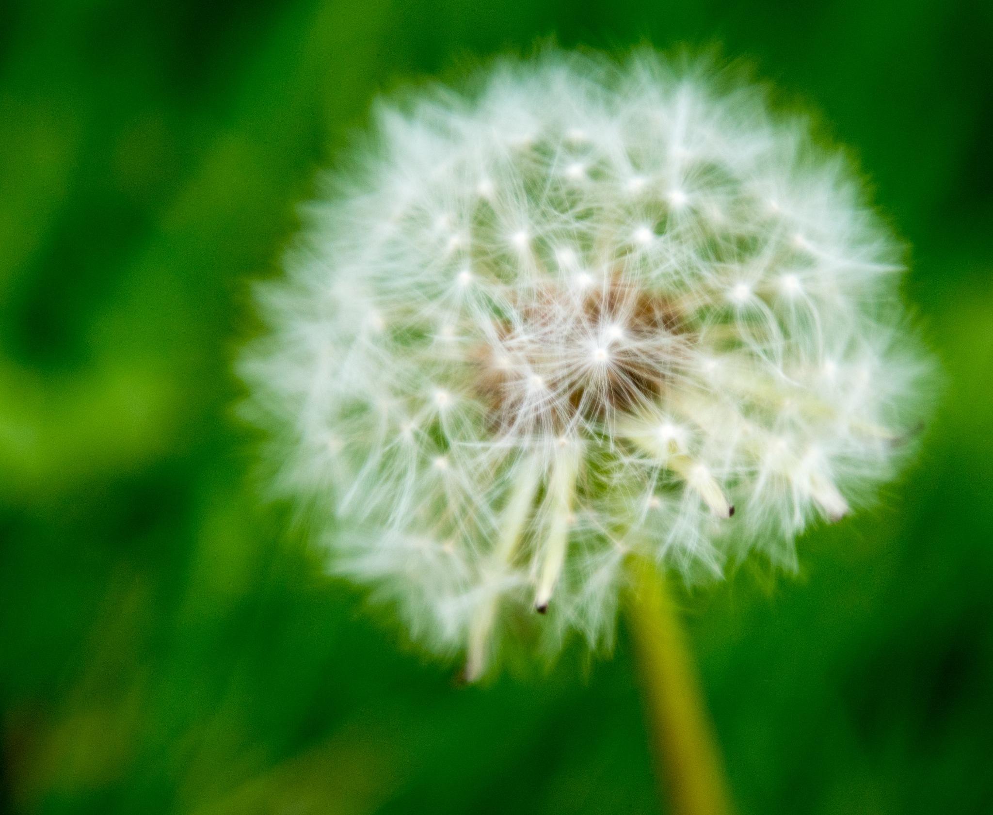 Seeds by Gruca_joe