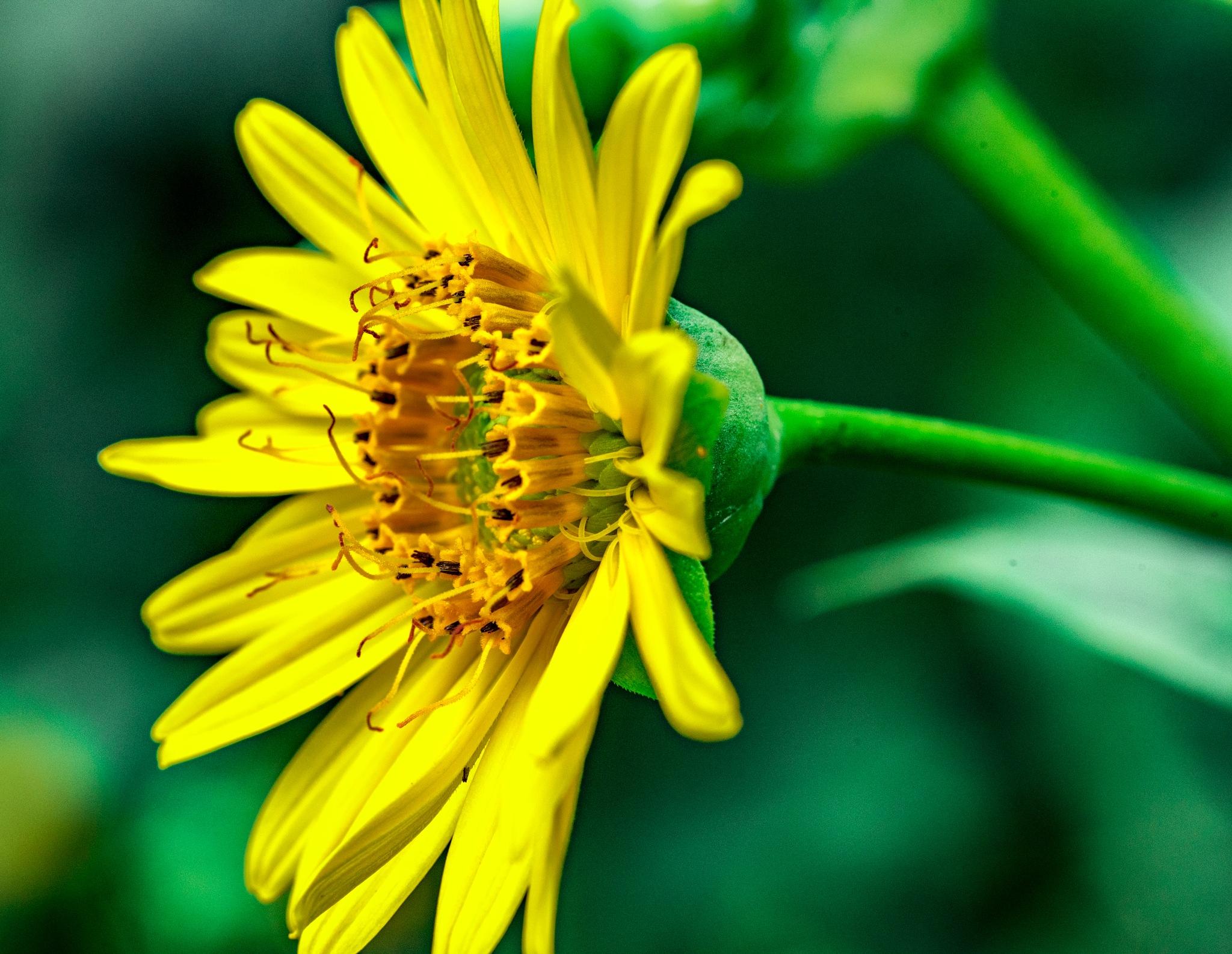 Yellow by Gruca_joe