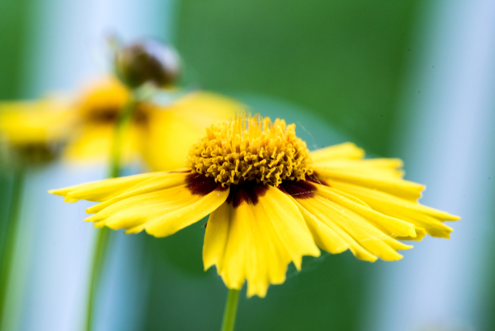 Yellow Button by Gruca_joe