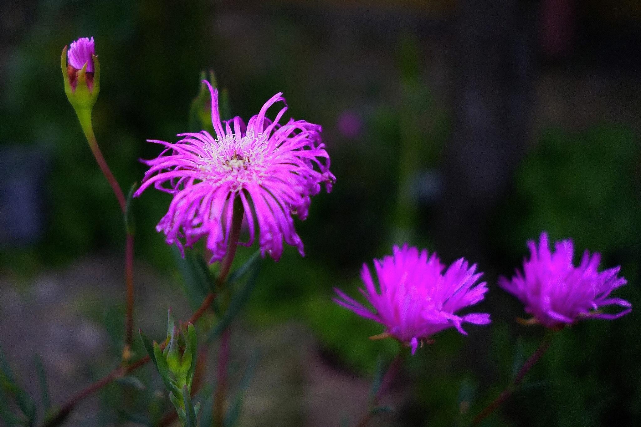 Light flowers by Marcelo Lorca