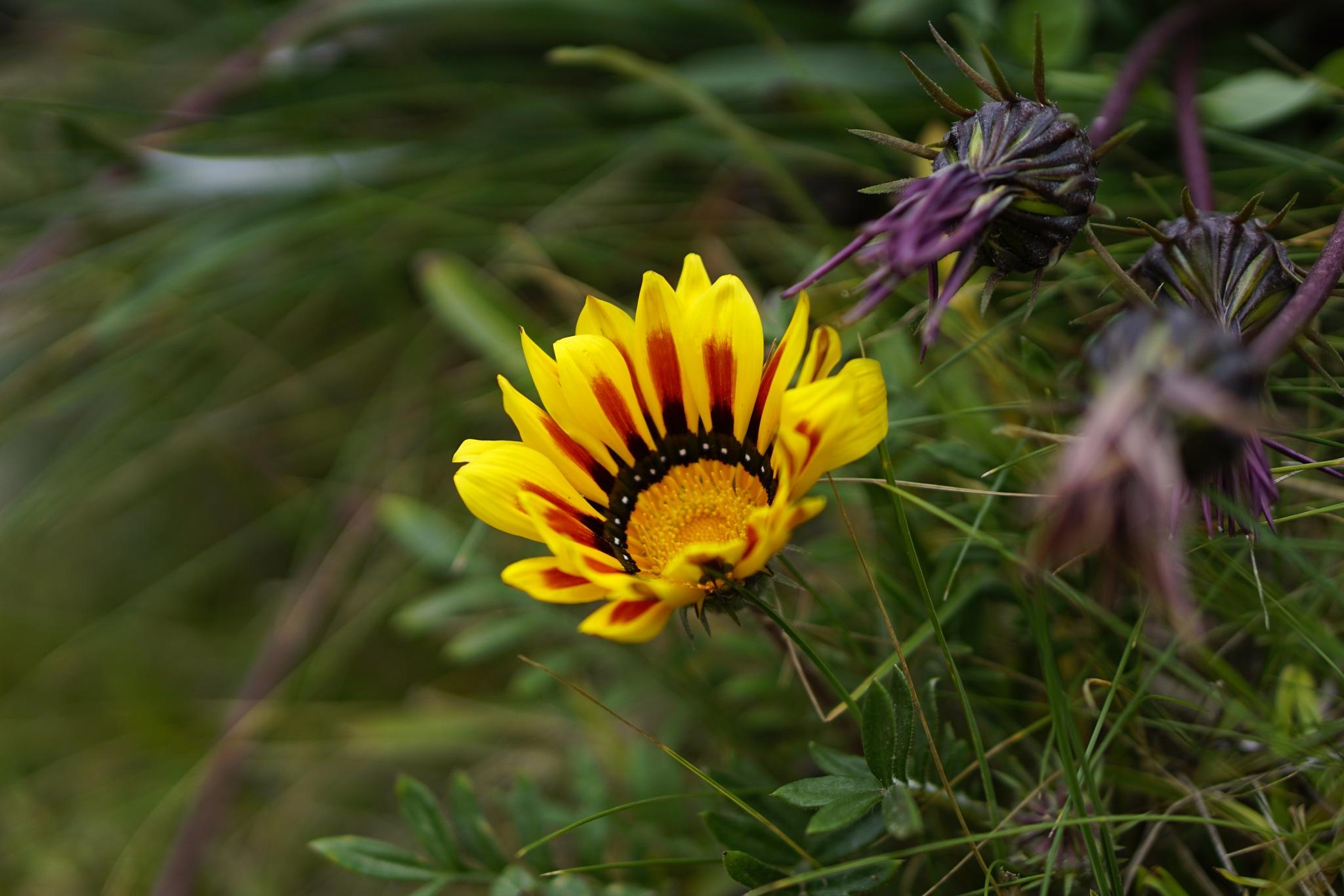 Light Flower by Marcelo Lorca