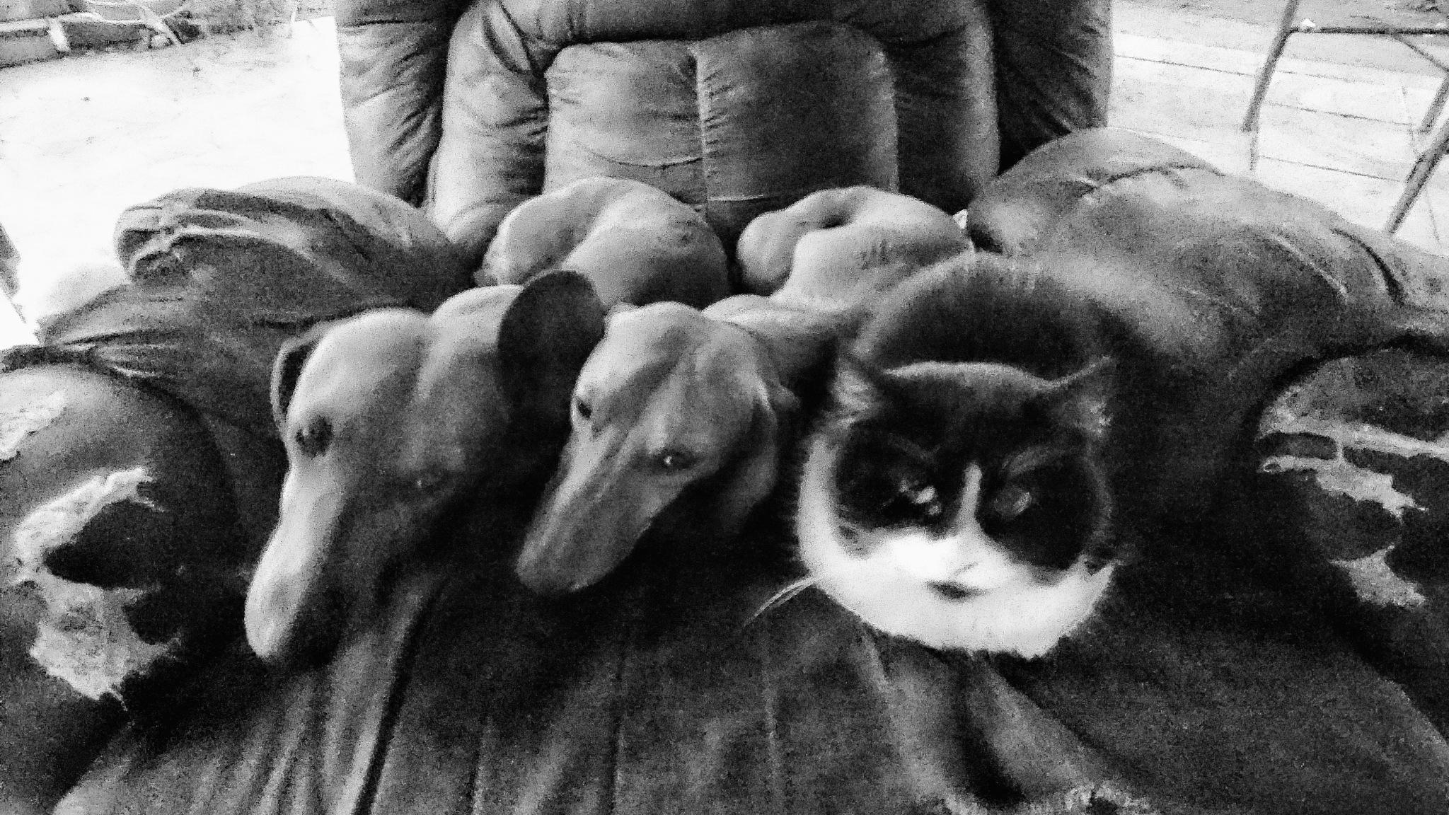 love cat by Marcelo Lorca