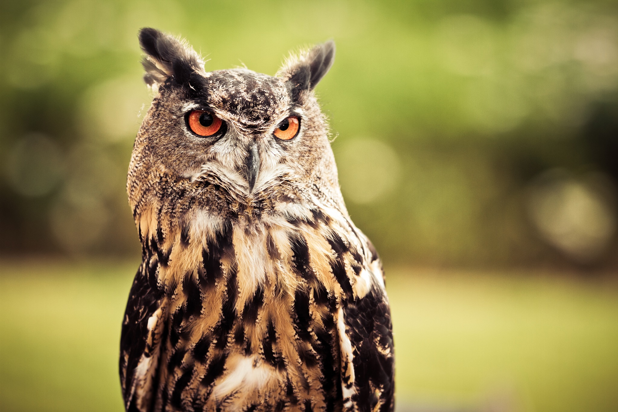 Eagle-Owl Pose by JL Photography