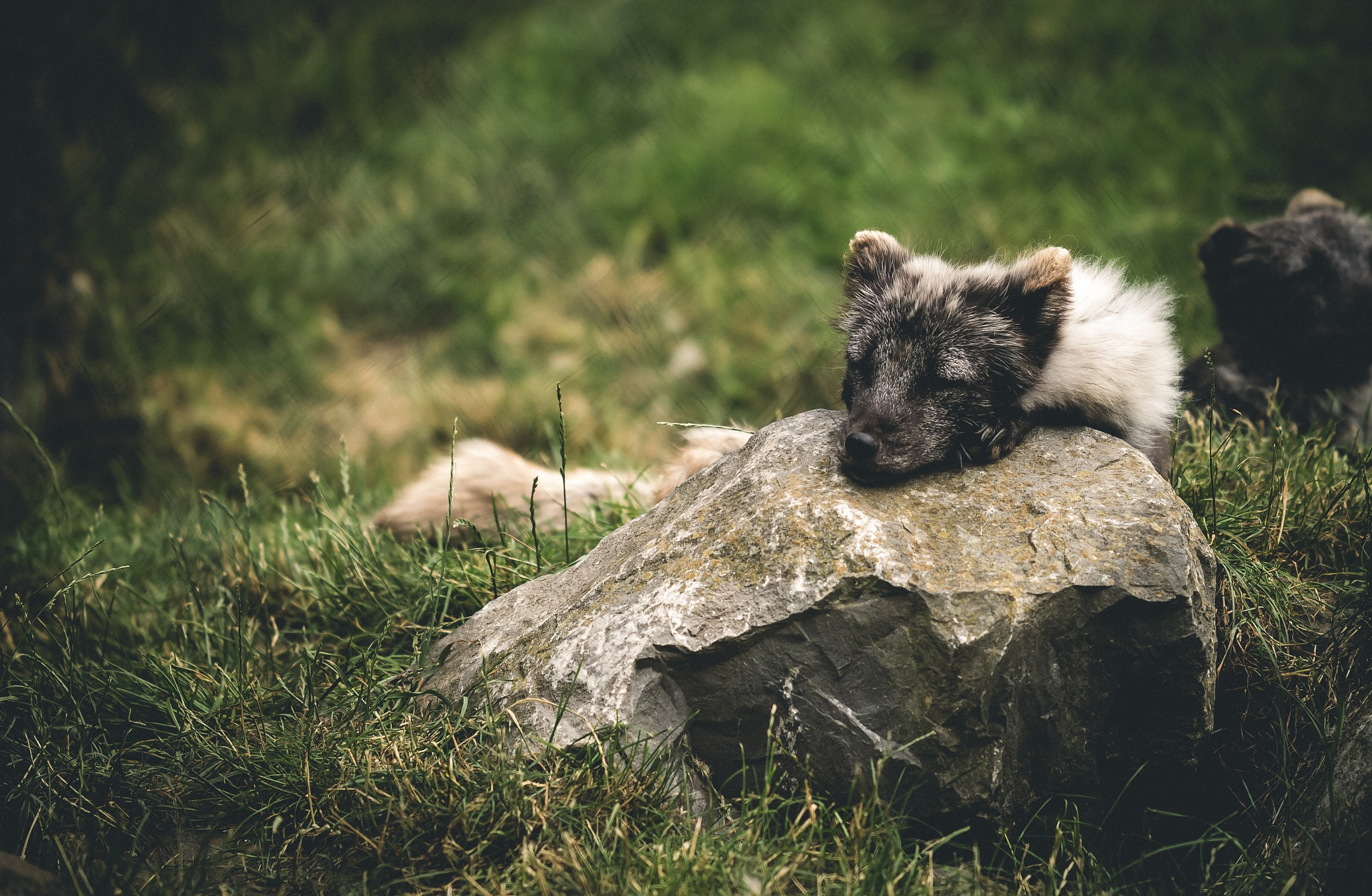 Naptime..  by JL Photography