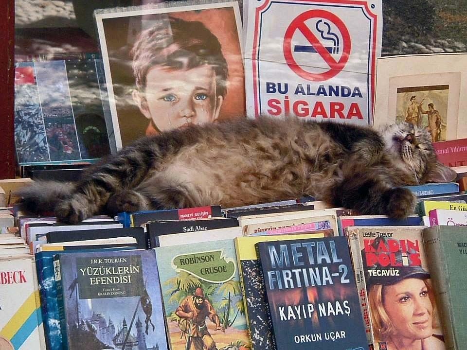 Sleeping in Istanbul by Daniela Baldoni